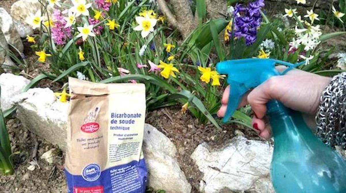 Le Bicarbonate De Soude Peut Grandement Aider Votre Jardin ... destiné Bicarbonate De Soude Jardin