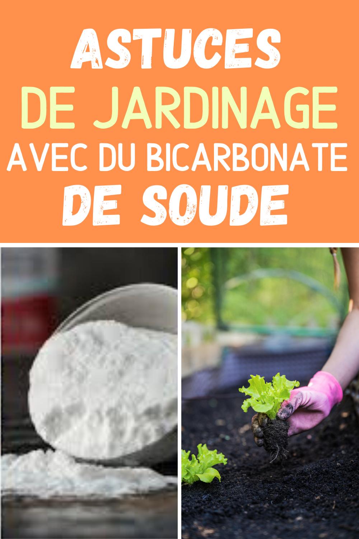 Les Bienfaits Du Bicarbonate De Soude Pour Un Jardin De Rêve ... destiné Bicarbonate De Soude Jardin