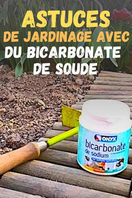 Les Bienfaits Du Bicarbonate De Soude Pour Un Jardin De Rêve ... serapportantà Bicarbonate De Soude Jardin