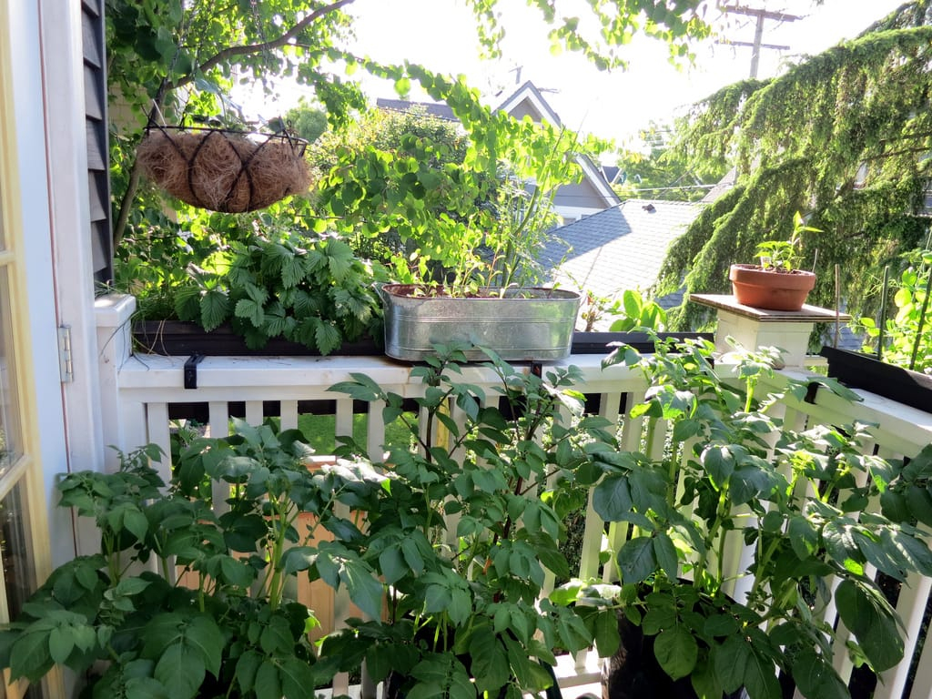 Mon Premier Potager De Balcon – Groww dedans Jardin Potager De Balcon