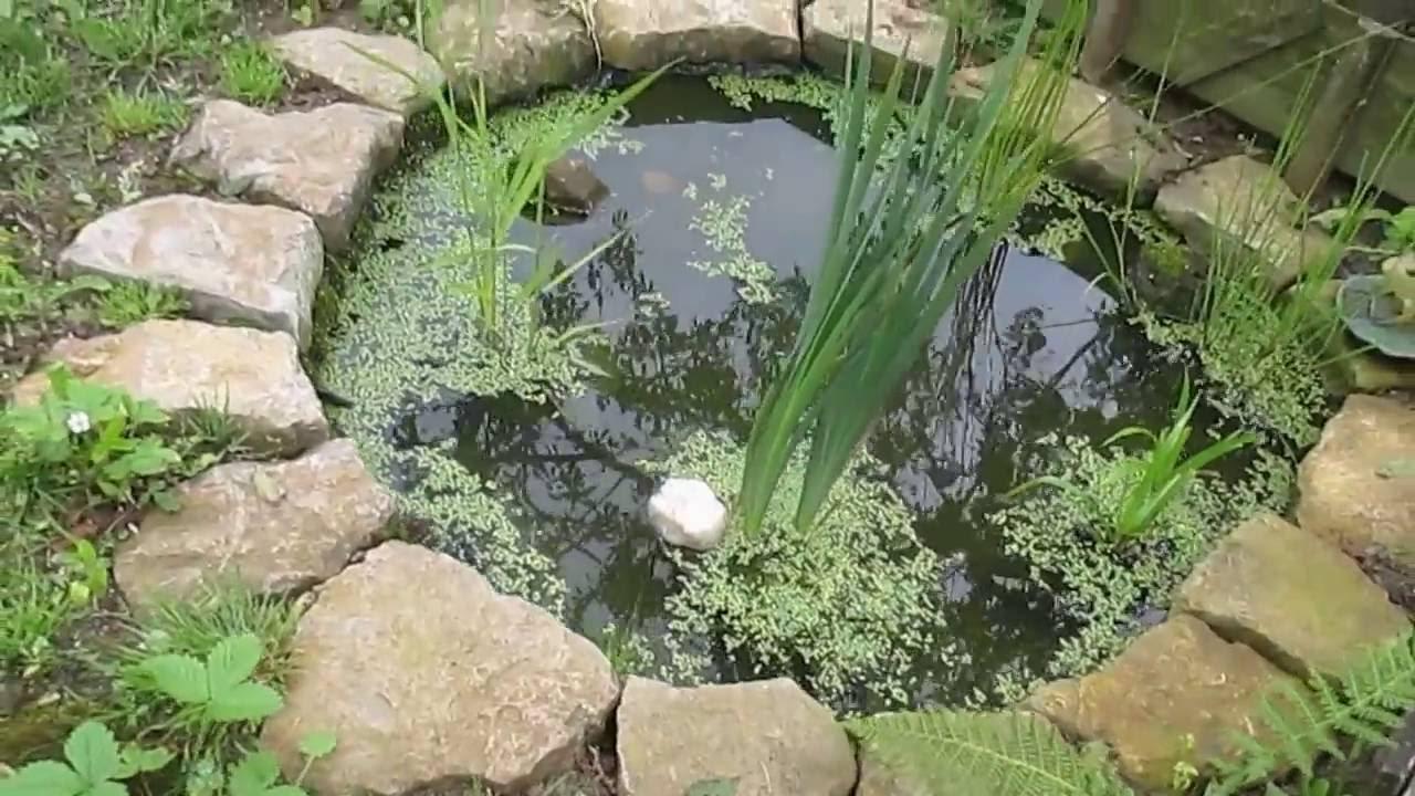 Petit Bassin De Jardin Avec Petites Bêtes D'eau Douce - dedans Petit Bassin Pour Jardin