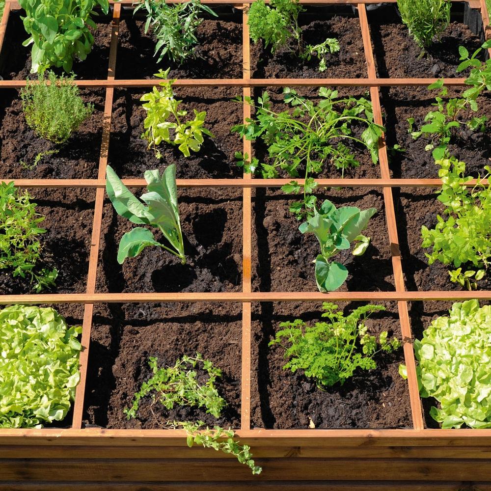 Un Mini Potager Sur Le Balcon destiné Jardin Potager De Balcon