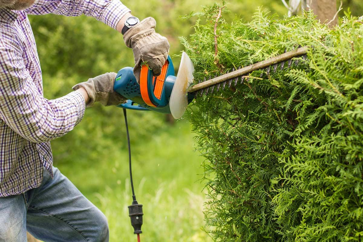 Tarifs D'un Jardinier À Domicile : Coûts Pour L'entretien De ... tout Tarif Entretien Jardin