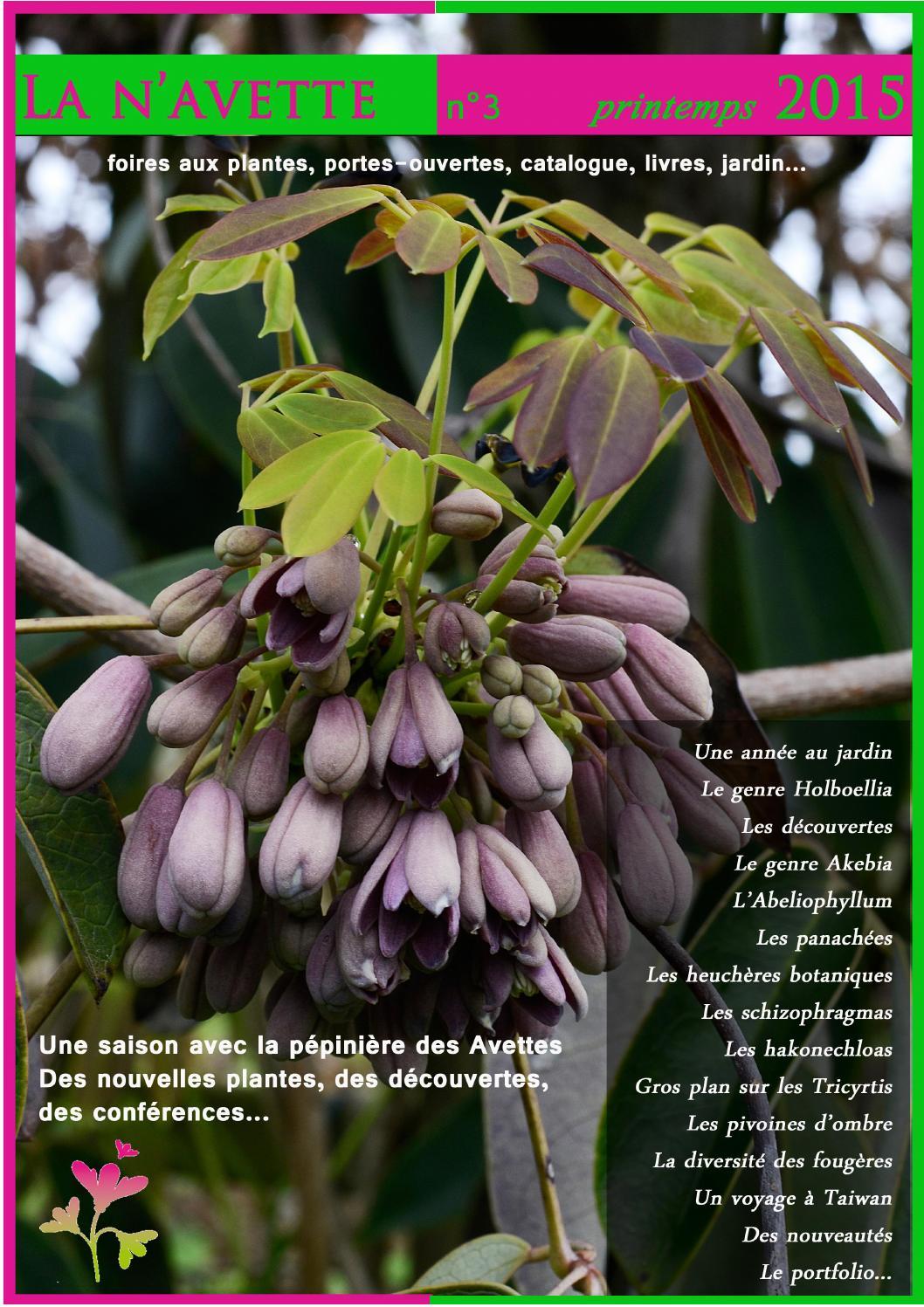 Bulletin La N'Avette N°3 By Cedric Basset - Issuu serapportantà Thermomètre Kew Garden
