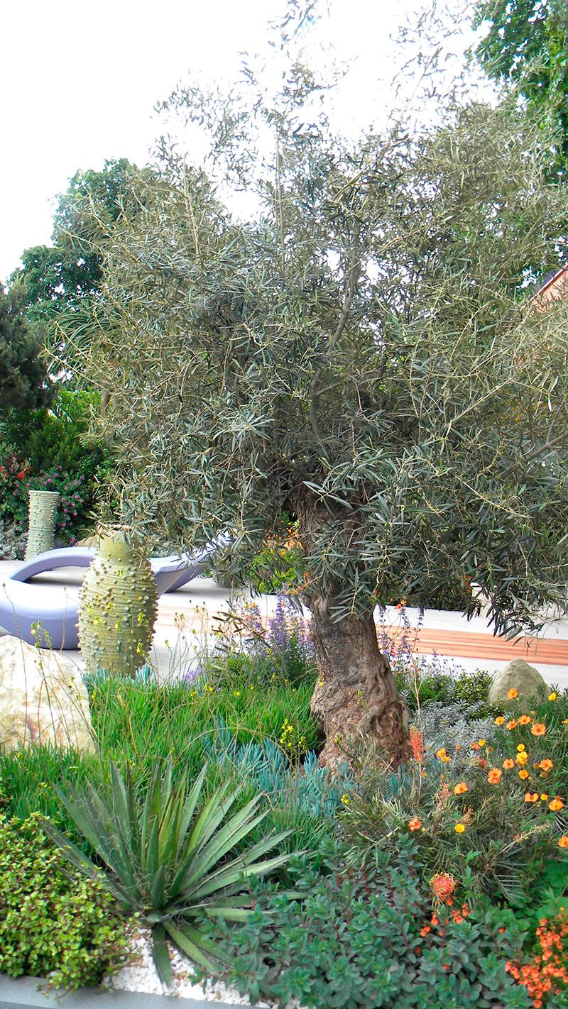 Jardins Exotiques Avec Des Fleurs Et Palmiers Pour Voyager intérieur Idee Massif Avec Olivier