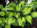 Jardin Japonais : 10 Plantes Vivaces Emblématiques En 2020 ... tout Couvre Sol Japonais