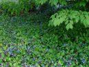 Plantes Couvre-Sol: Top 10 Des Espèces Incontournables ... serapportantà Couvre Sol Japonais
