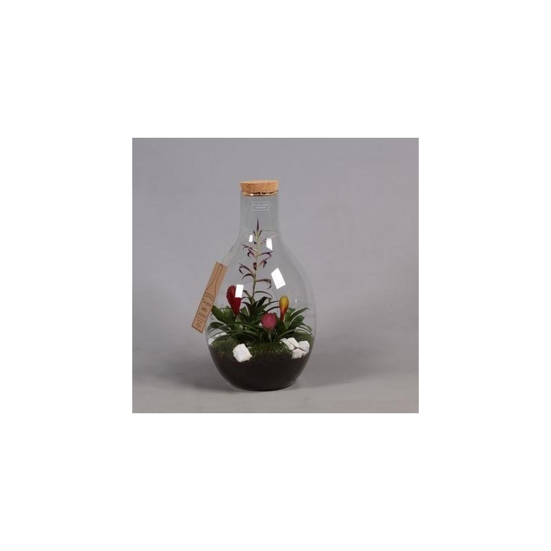 Terrarium Bromélia En Verre - 4 Plantes - Pépinières ... avec Date Braderie Grosfillex 2020